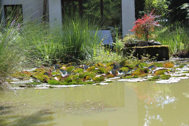 der Seerosen-Teich meiner Oma