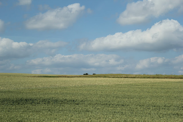 Felder im Taunus