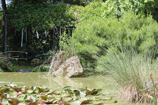 der Teich meiner Oma