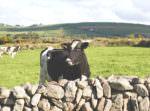 Irland-Rundreise mit Kerrygold, Bord Bia und Tourism Ireland: Von der Milchfarm im County Cork bis in die Cheddar-Fabrik