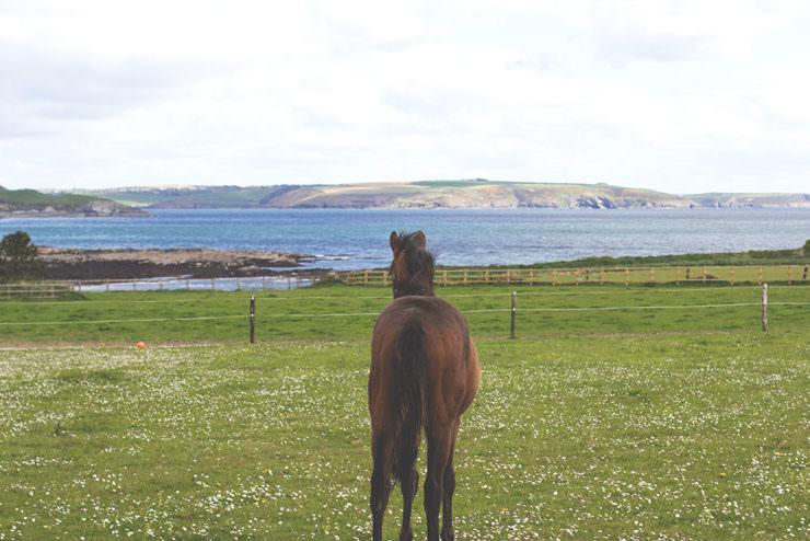 Irland-Rundreise am Wild Atlantic Way mit Kerrygold, Bord Bia und Tourism Ireland
