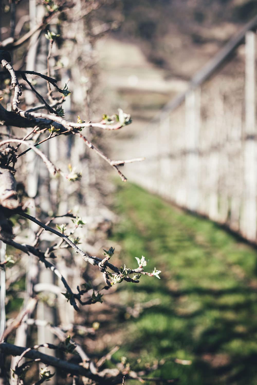 Auf Genussreise durch Südtirol mit Südtiroler Speck g.g.A., Südtiroler Apfel g.g.A., Stilfser g.U. Käse und Südtirol DOC Wein | moeyskitchen.com #südtirol #southtyrol #suedtirol #altoadige #QualitätEuropa #EnjoyItsFromEurope #SuedtirolerApfel #StilfserKaese #SuedtirolerSpeck #SuedtirolWein