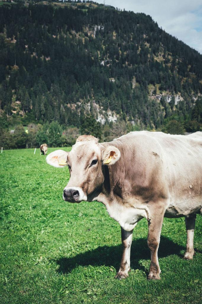 In Zillis in der Schweiz | moeyskitchen.com #zillis #graubünden #schweiz #reisebericht #blogger #reisen